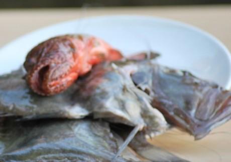 Çirkin Balıklardan İskorpit ve Dülger